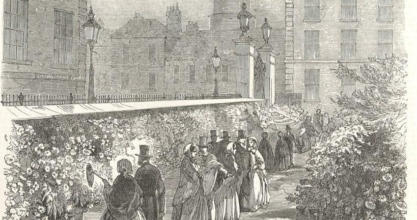 3-Chrysanthemum-show-The-illustrated-london-news-Nov-18-1854