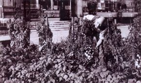 7-Allotment-in-IT-garden-1944-2