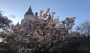 Magnolia-in-early-spring