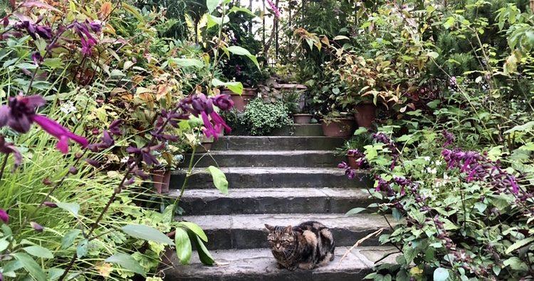 Pot-Display-and-Garden-cat-Patsy