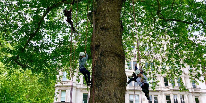 tree-scaling